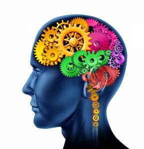 canstock brain
